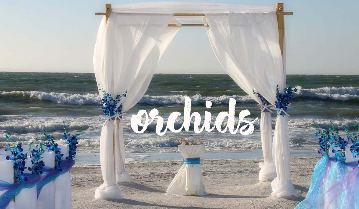 Florida beach wedding themes - orchids