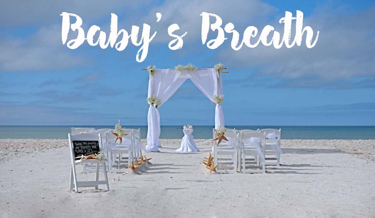 Florida beach wedding themes - Baby's breath
