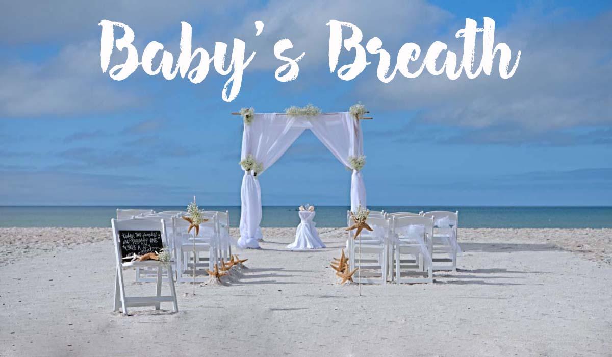 baby's breath beach wedding theme