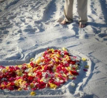 petals in the sand